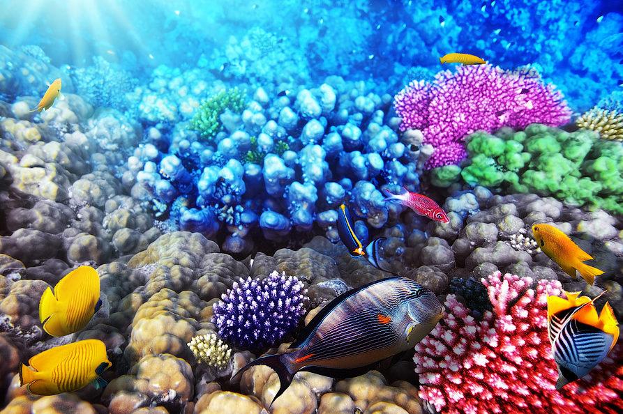 В Доминикане от жизнедеятельности человека начали спасать коралловые рифы iDominicana