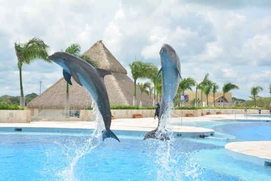 Dolphns Dominicana Bavaro Punta cana экскурсии в Доминикане
