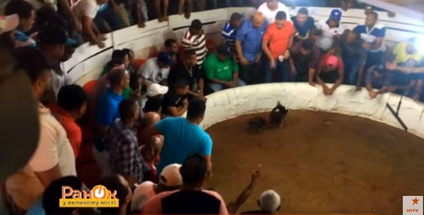 «Эмигранты» в Доминикане: транспорт, питание и развлечения iDominicana