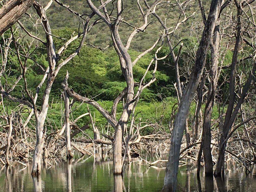 Бараона: Бухта орлов, ларимар, крокодилы и аномалии Polo Magnetico