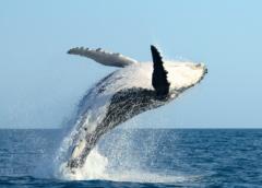 Самана + наблюдение за китами в Доминикане