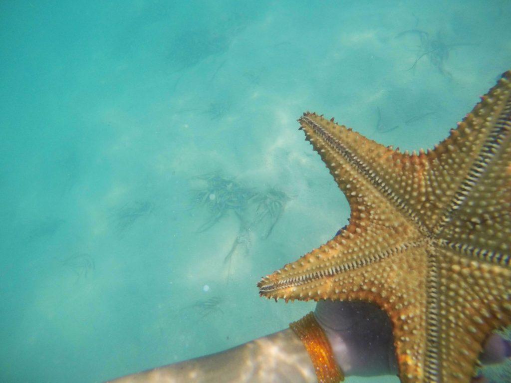 Новинка! Эксклюзивная экскурсия на остров Саона!