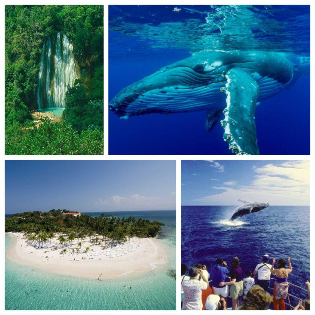 АКЦИЯ! Экскурсия на китов в Доминикане от $100!