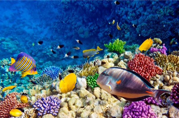 В Доминикане создадут первую карту Карибских коралловых рифов