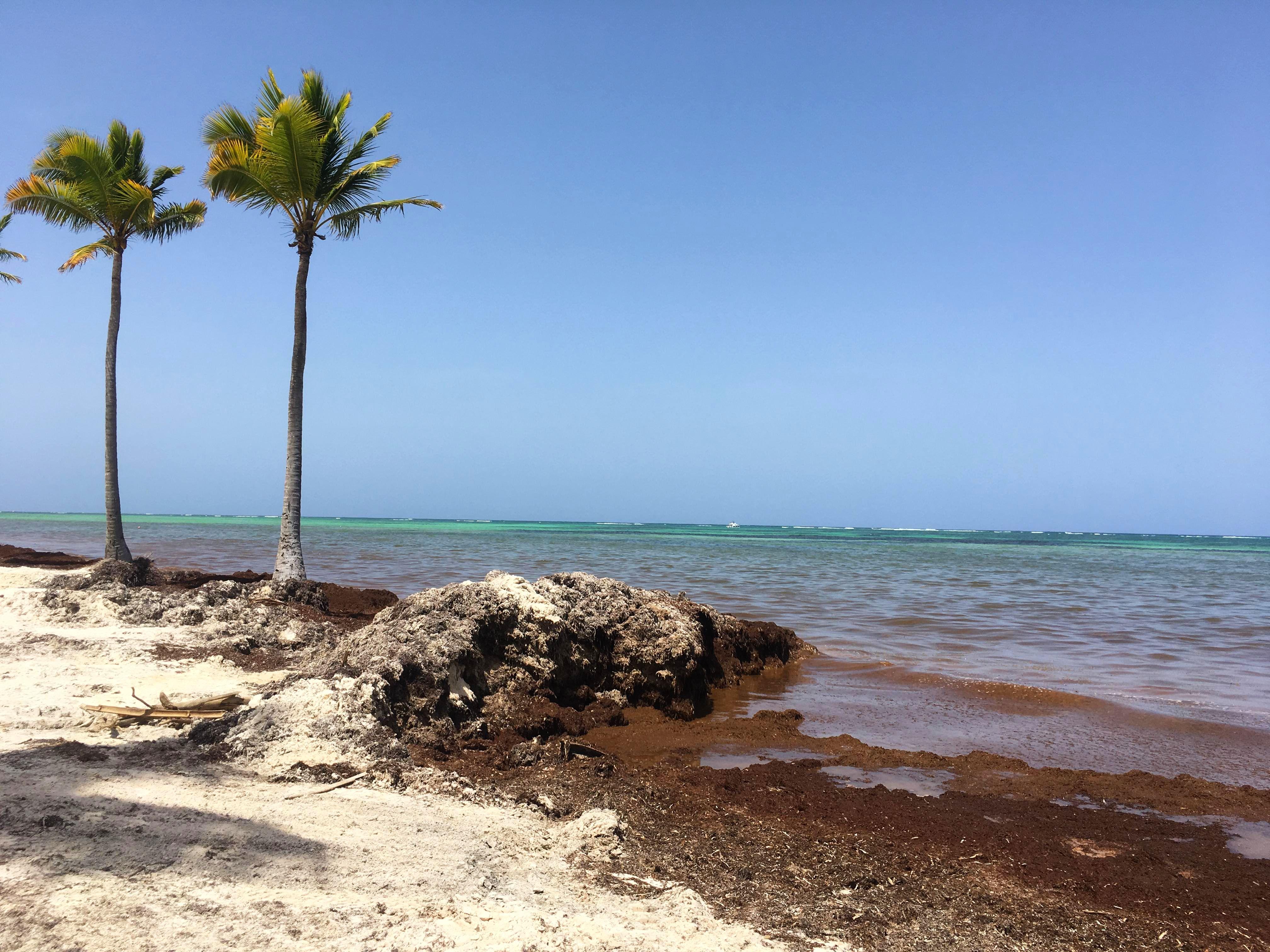 Пляжи Пунта-Кана атаковали водоросли