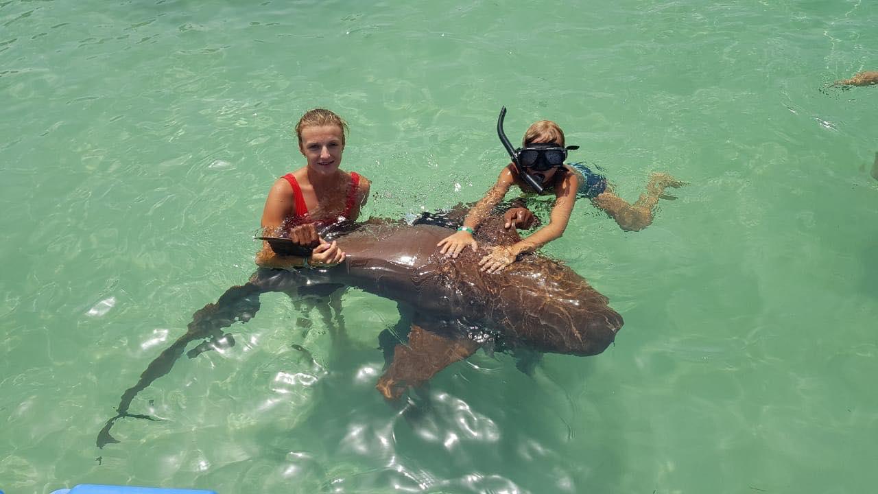 Как проходит экскурсия купание с акулами и скатами в Доминикане