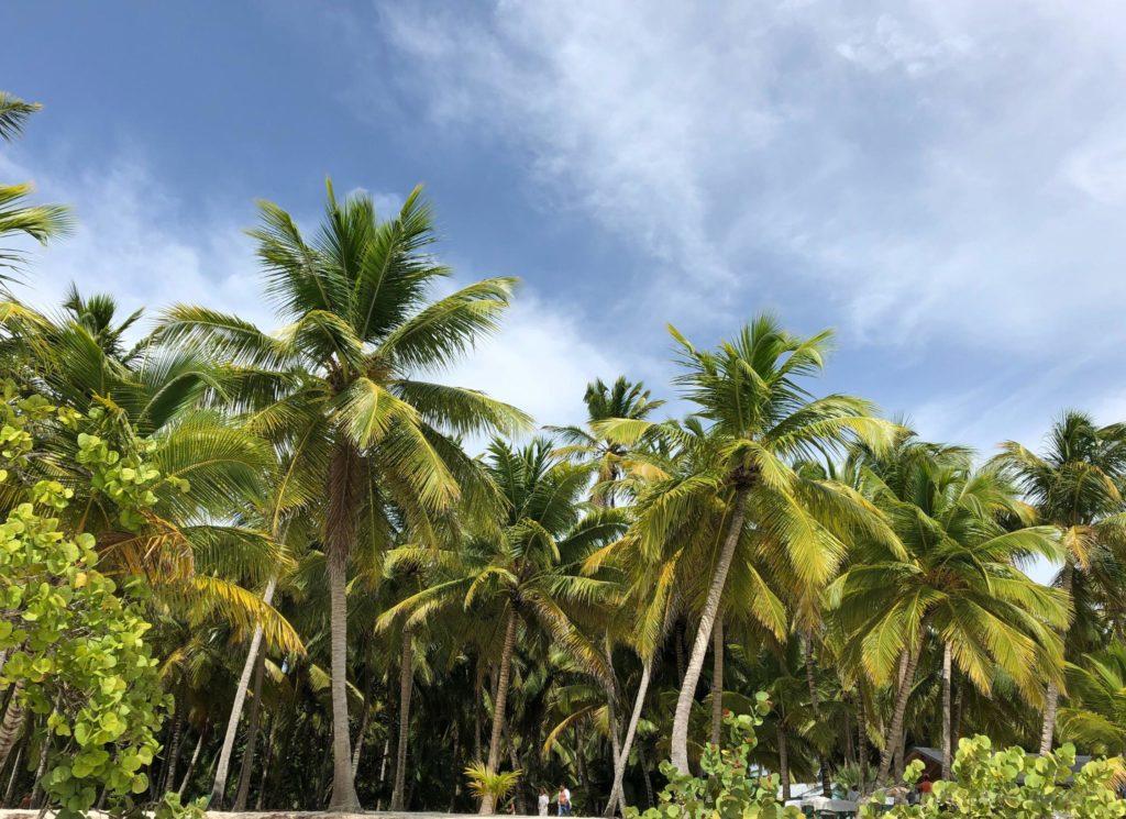 Экскурсия Саона Paradise от iDominicana.com. Фотоотчет