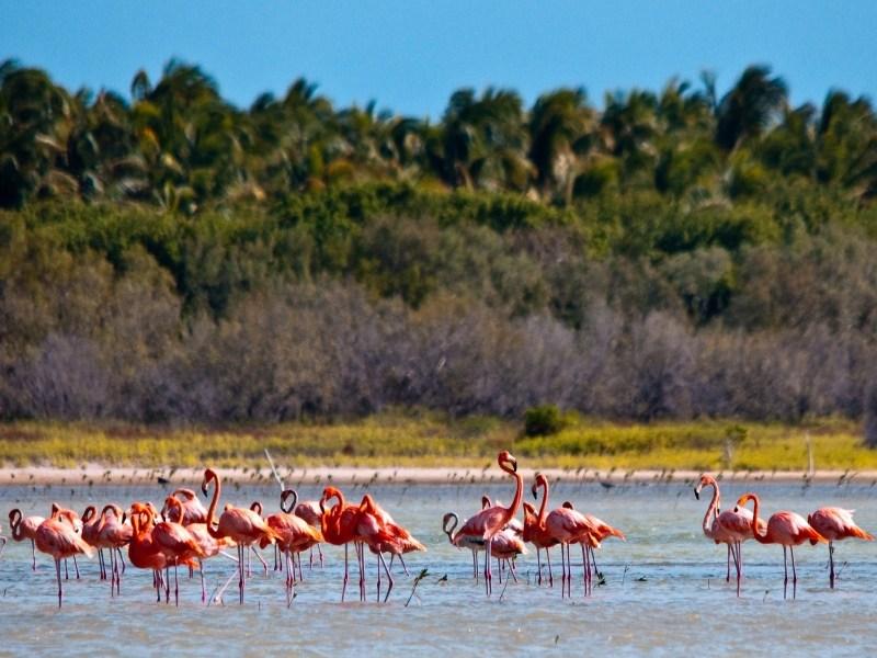 Экскурсии в Доминикане от iDominicana.com