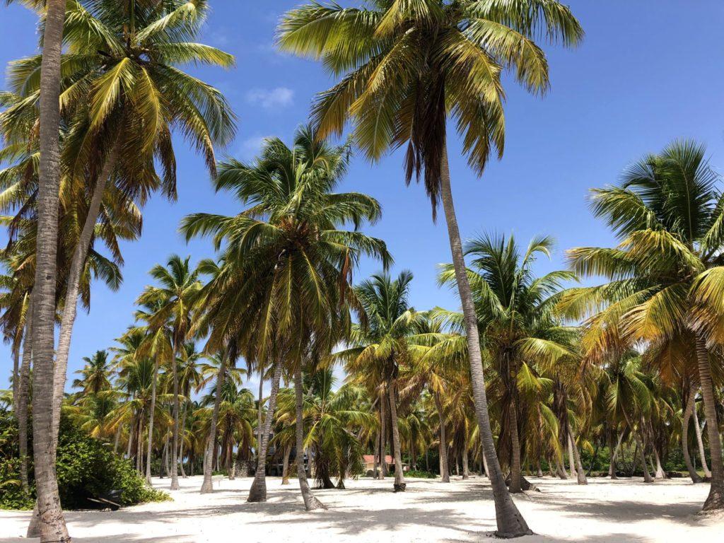 Доминикана в сентябре погода, туры и лучшие курорты 2