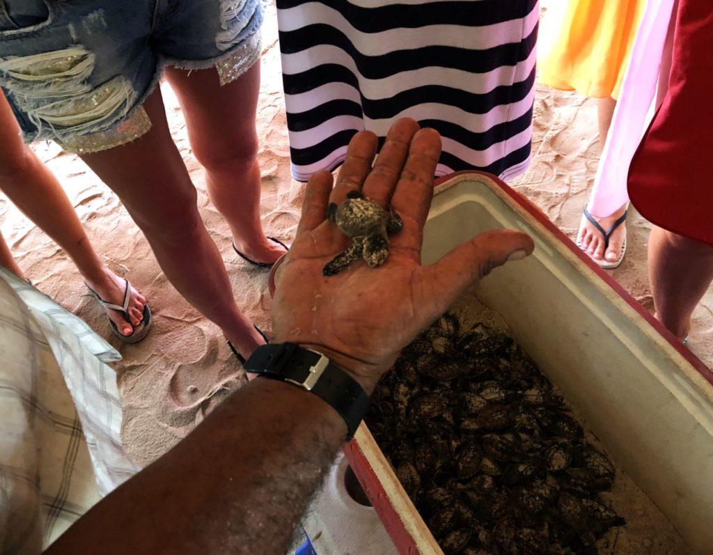 Саона эксклюзив: питомник черепах. Видео