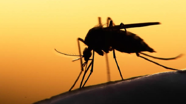 В Доминикане зарегистрирована вспышка малярии