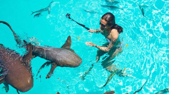 Купание с акулами и скатами в Доминикане