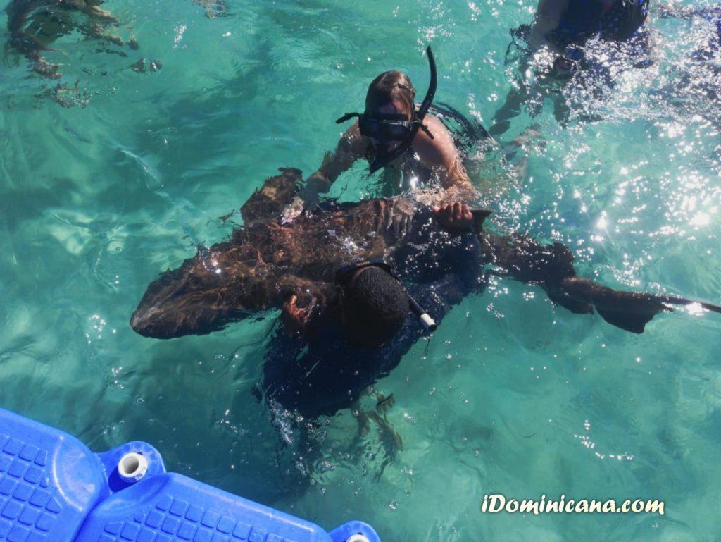 Акулы в Доминикане: купание с акулами и скатами. Фото наших туристов