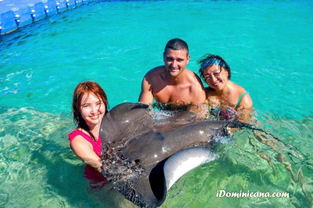 Экскурсия купание с акулами и скатами в Доминикане - стала дешевле!
