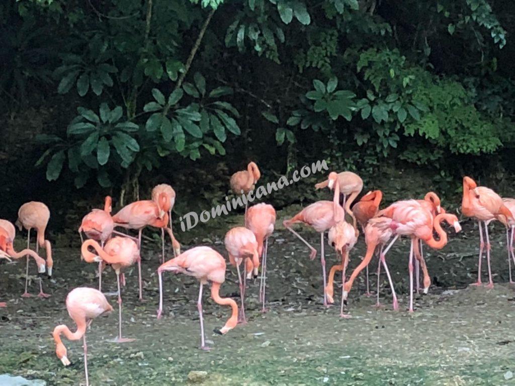 Санто-Доминго + Зоопарк (до 10 чел) – $130 iDominicana.com