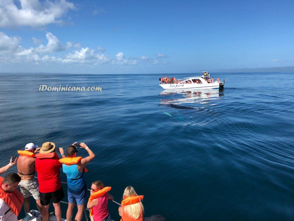 Самана + наблюдение за китами в Доминикане iDominicana.com