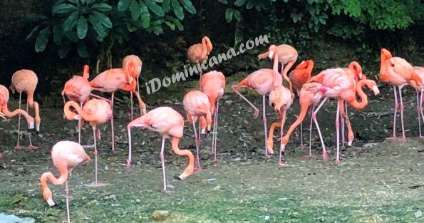 Зоопарк Санто Доминго iDominicana.com logo