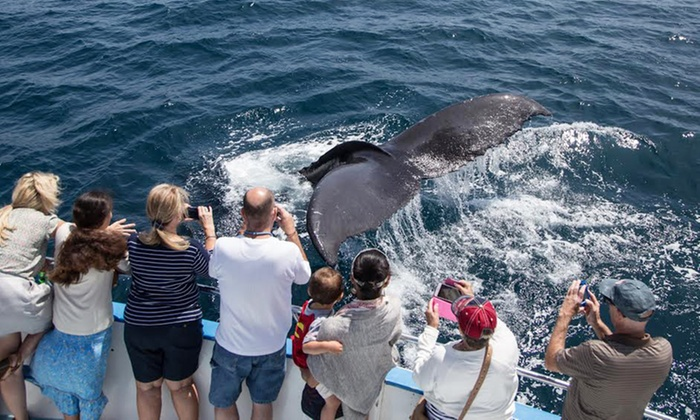 Экскурсия наблюдение за китами в Доминикане теперь проходит ежедневно