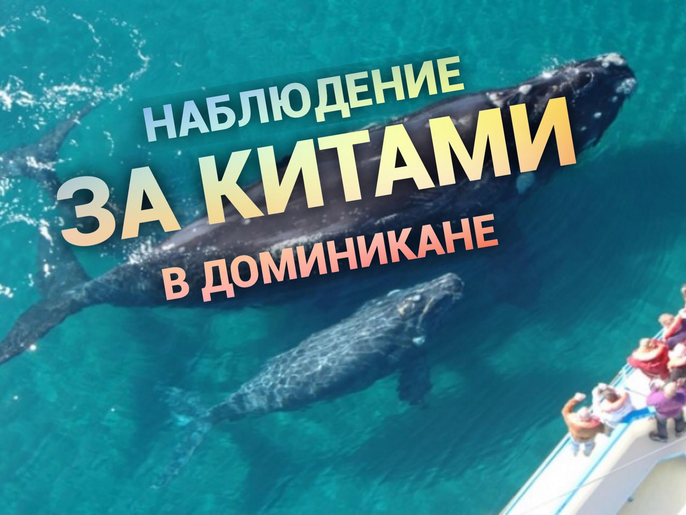 Киты в Доминикане: как проходит экскурсия на китов. Фото. Видео