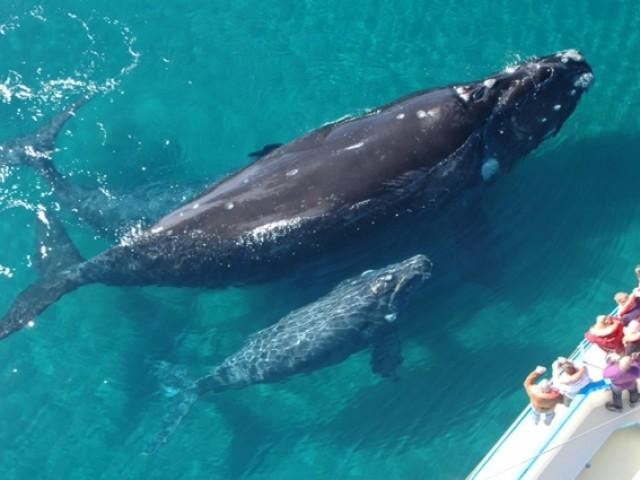 Журнал Вокруг света опубликовал материал АйДоминикана о наблюдении за китами