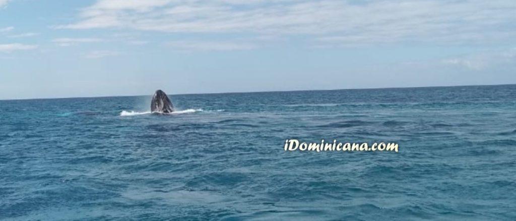киты на острове Саона