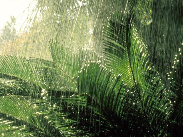 Дождь в Доминикане: что делать?