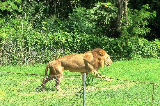 Зоопарк в Доминикане