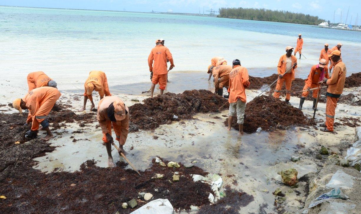 С пляжей Бока Чика убрали 70 тонн водорослей