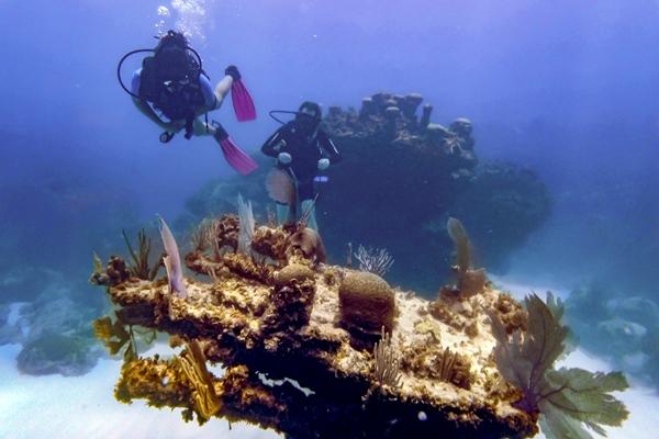 В Пунта-Кана откроют первый живой музей моря