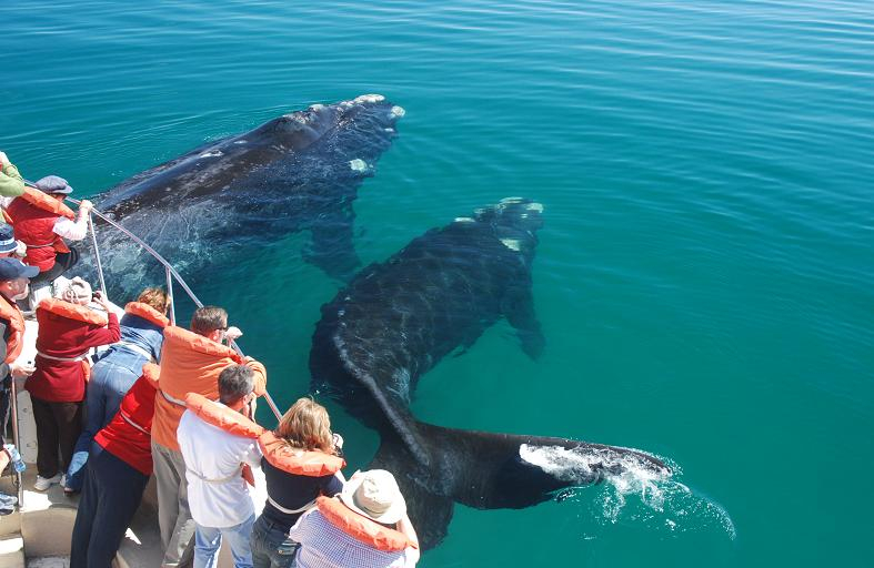 Ученные выяснили: киты больше всего поют именно в Доминикане