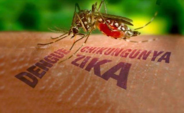 В провинции Бараона истребляют переносчиков вируса зика и лихорадки денге
