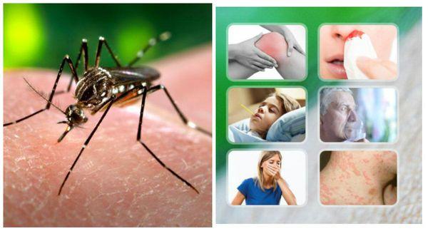 Доминикана лихорадка: от денге в этом году пострадали 8855 чел