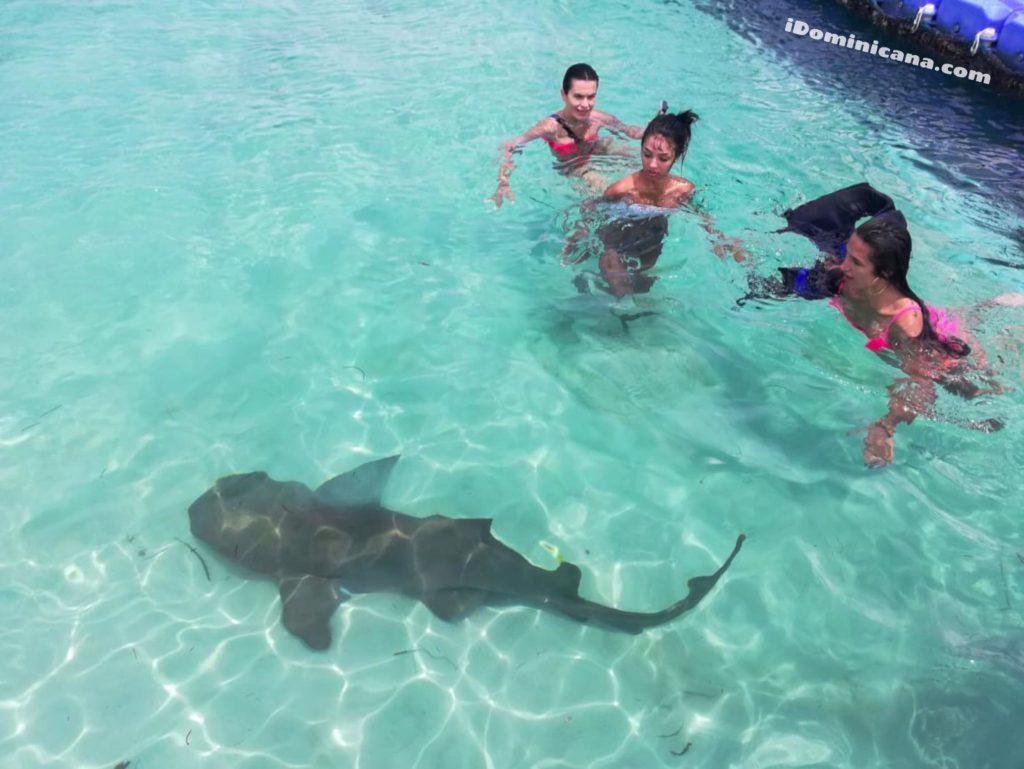 Плавание с акулами и скатами в Доминикане: