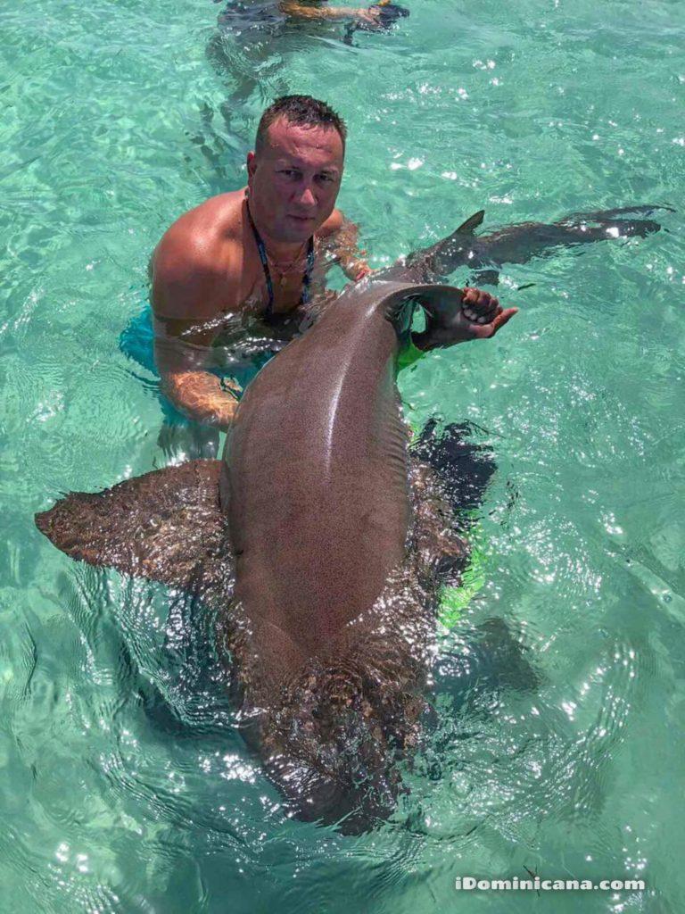 Плавание с акулами и скатами в Доминикане фото туристов iDominicana.com