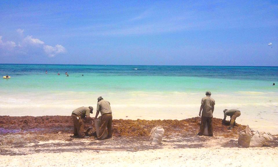 Доминикана без водорослей: в океане установят барьеры от саргасов