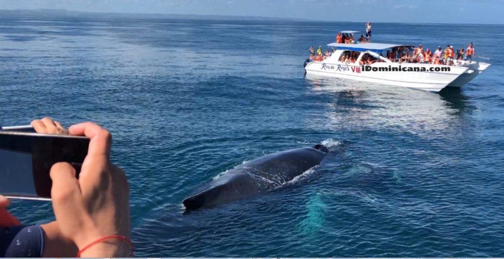 Киты в Доминикане 2020 - новое ВИДЕО ко Всемирному дню китов! iDominicana.com