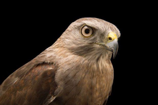 Названы самые редкие птицы Доминиканы - 40 видов
