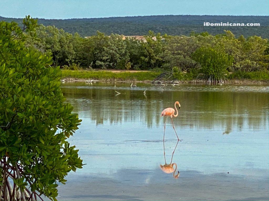 Бухта орлов в Доминикане: самые красивые пляжи. Видео