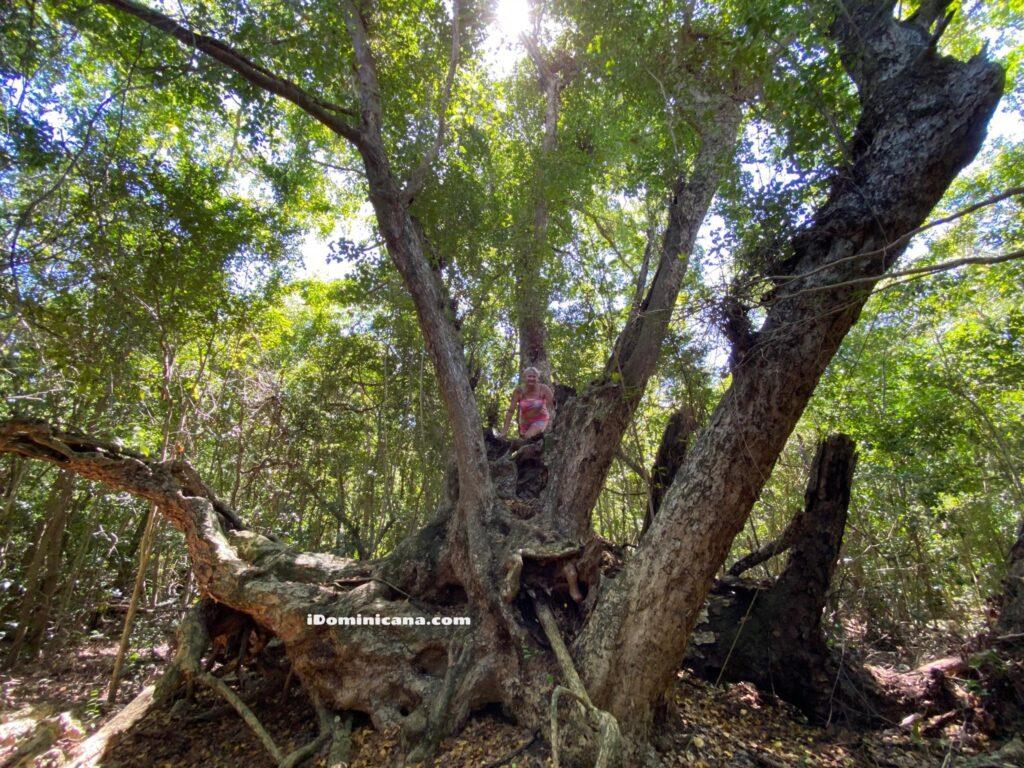 Экологический заповедник Охос Индигенас (Ojos Indígenas) в Доминикане