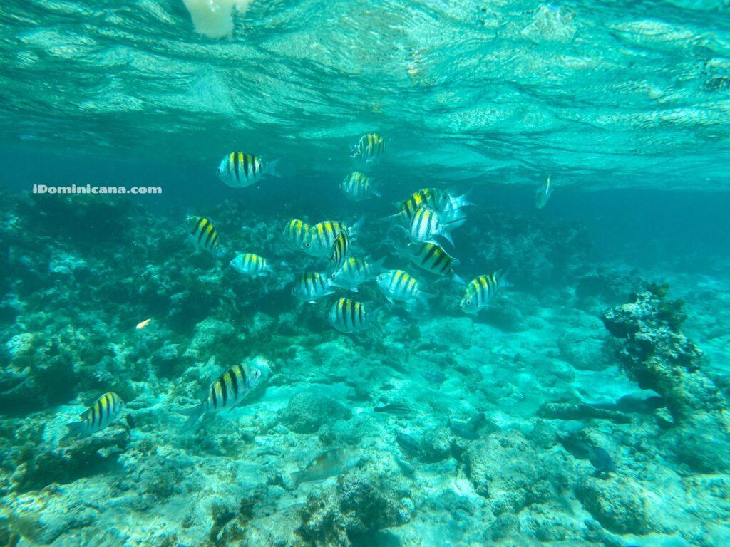 Райский остров Кайо Арена, 27 водопадов, гора Исабель де Торрес