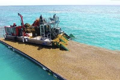 Доминикана установила барьер от водорослей